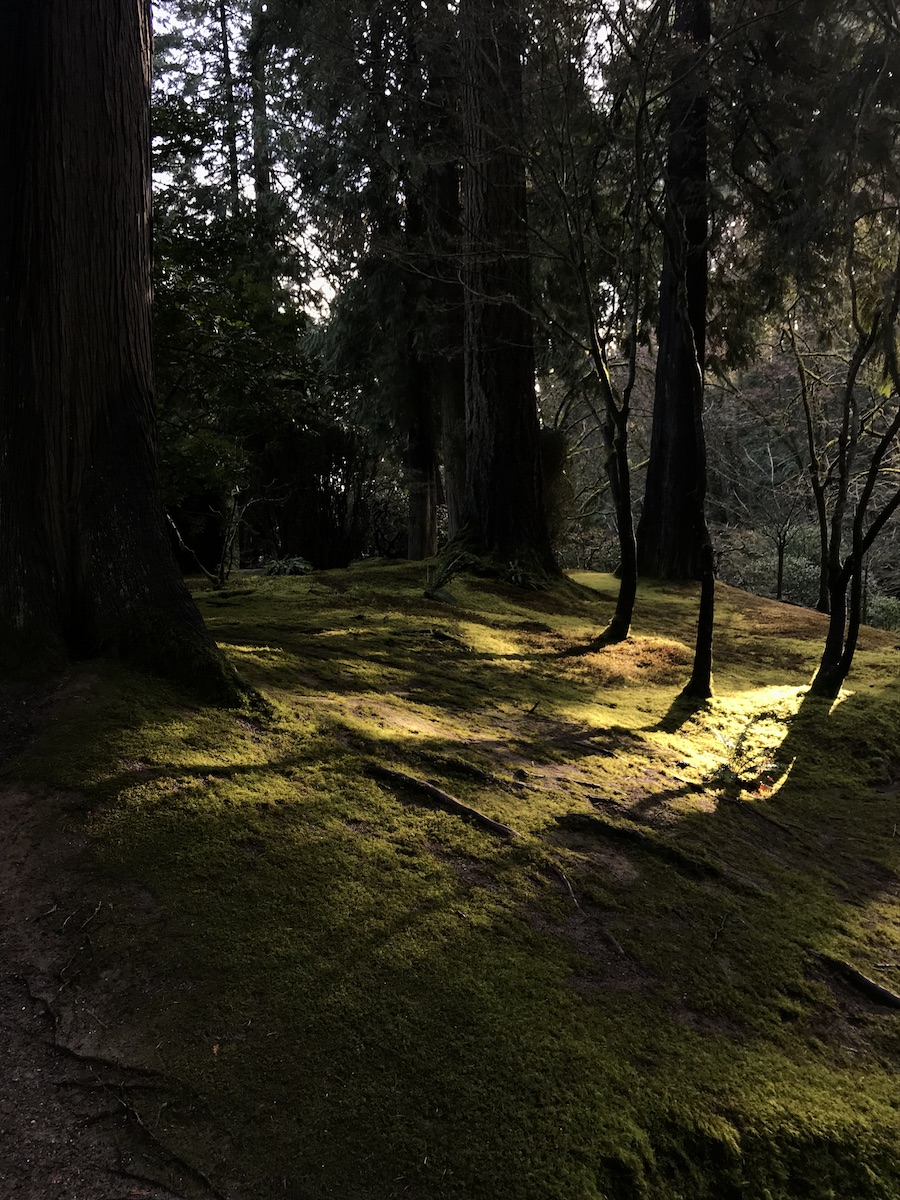 Sunlight shines through tall trees onto mossy glade floor.