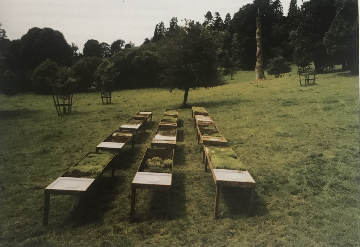 On a grassy knoll with dark green woods in the background, a 3 x 4 block of wooden tables with green specimens embedded in their tops, possibly grass, moss, viewed in 1-point perspective.
