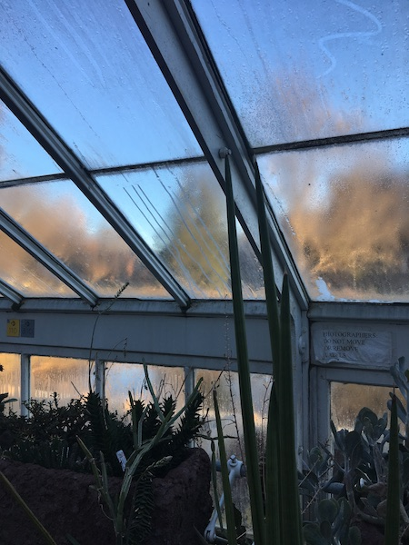 Picture of a foggy roof looking out from the top of a greenhouse